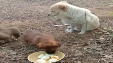 流浪的狗妈妈,有人投食舍不得吃,先给狗宝宝吃