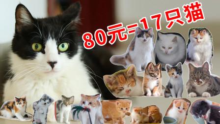 80元买了一只猫,回家变17只……求铲屎官的心理阴影
