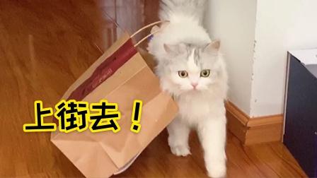猫咪拿了个袋子准备去购物,主人笑喷了:这是去要饭吗?