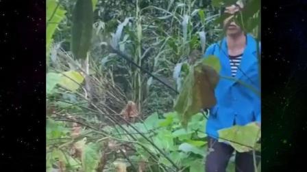 不就是偷吃个黄瓜,有必要做的那么绝吗,我太难了