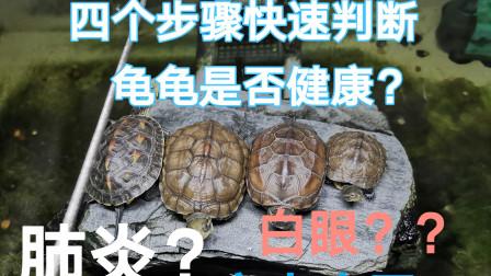 养龟必看系列——四个步骤快速判断龟龟是否健康