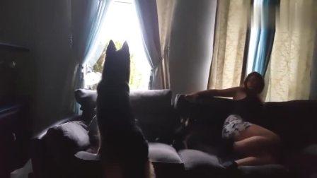 """姐姐故意把窗帘拉上,狗子竟然去寻找""""光明"""",太聪明了!"""