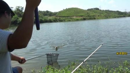 一个人钓水库,鱼口好凶猛不是顶漂就是黑漂,鳊鱼这么大