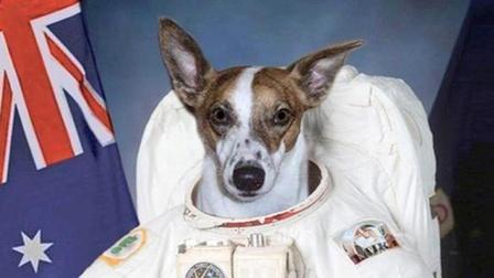 """史上第一只""""太空狗"""",在太空""""生活""""长达63年,是前所未有的航天英雄!"""