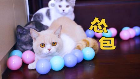 用500个球把房间布置成游乐场,猫咪会喜欢吗?猫:好嗨哟!