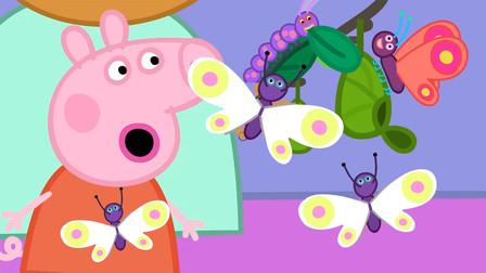 小猪佩奇最新第八季 观察毛毛虫如何变成美丽的蝴蝶 简笔画