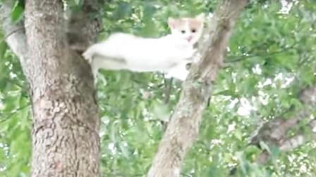 一只小猫爬树,不料上树容易下树难,镜头记录搞笑一幕!
