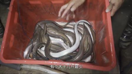 赶海小伙带网友出海放鳗鱼钩,捕获了10几斤海鳗,卖了400块,剩下的加餐