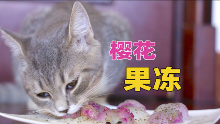 花10元给猫咪做猪皮樱花冻能成功吗?猫:大型翻车现场!