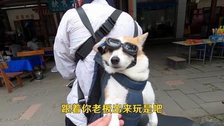 这是一只喜欢风和自由的狗狗?