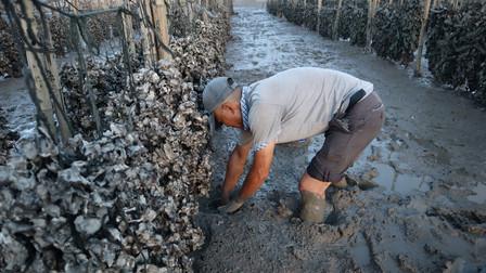 泰叔在海蛎田发现怪事,海蛎肉被吃的干干净净,田里肯定有大货
