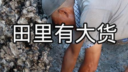 泰叔在海蛎田发现问题,海蛎被撬开肉没了,果然田里有大货