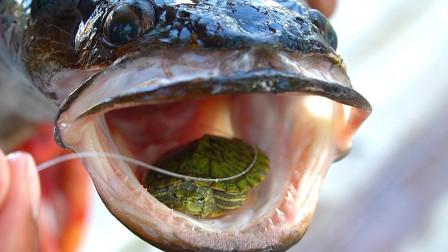 小伙钓上条大鱼,肚子里藏着只活乌龟,这是怎么回事?