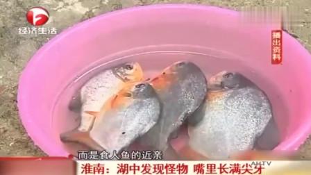 淮南:湖中发现怪物 嘴里长满尖牙