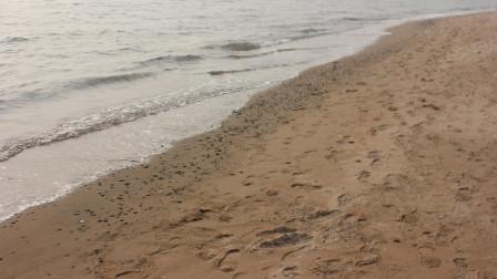 黄河流经黄土高原,每年裹挟16亿吨泥沙,为何千万年没有填平渤海