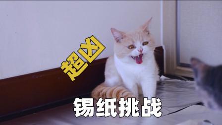 把房间铺满锡纸,猫咪会害怕吗?猫:在上面打滚!