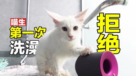 女主人一口气洗了5只缅因小奶猫,才3个月就这么乖了?我不信!
