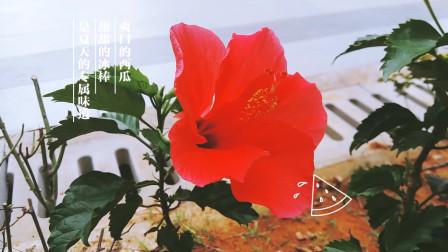 自然美景 音乐视频04-夏天的风 网络红歌 纯音乐 dj歌曲 奇花异草