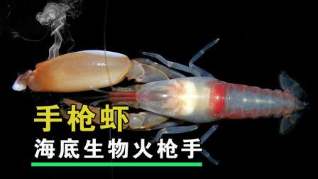 5厘米的手枪虾,为什么能成为海底生物火枪手?
