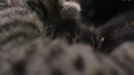 猫咪耳朵有32块肌肉,诚然睡着了,但是听力却复苏着