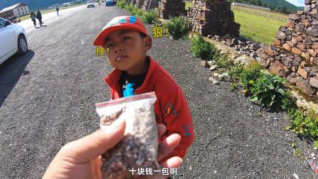 滇藏线自驾去西藏,经香格里拉遇绝美景色,兴奋奔跑后结局悲剧了