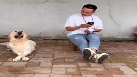 到底是人学狗呢?还是狗学人呢?
