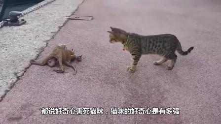 小奶猫打拳击没打过主人,反手给了猫爸爸一拳,着实是太恶搞了