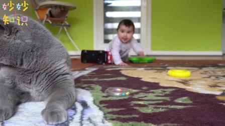 小宝宝想跟猫咪玩,连续追着不放,猫咪种种躲一脸厌弃!