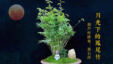 《月光下的凤尾竹》葫芦丝,经典纯音乐欣赏