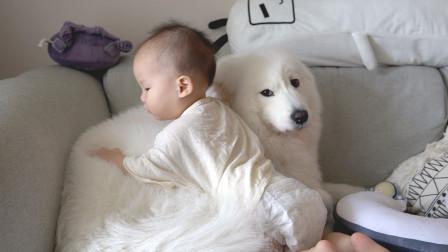 家里有小婴儿不能养猫狗?在忙碌的时候,软糖和麻糬帮了我们很多