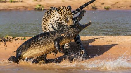 鳄鱼正在享受日光浴,谁曾想,这是它最后一次见到阳光!