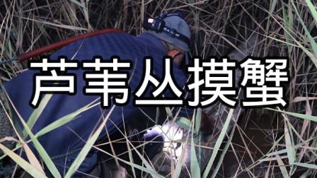一米高的芦苇丛里蟹洞不少,泰叔等傍晚去摸,半坑半水的地方最多