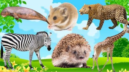 认识长颈鹿、仓鼠等6种动物,乐宝识动物