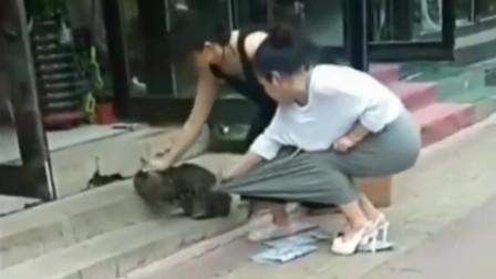 猫的胆子都比我的大,竟抓着小姐姐的裙子不放!