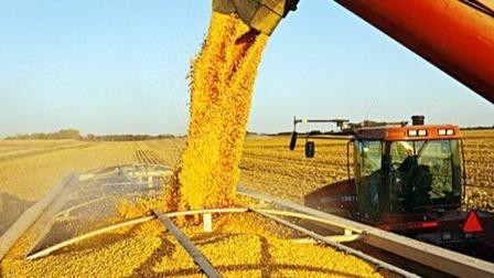 """学""""精明""""了?西方百万吨玉米出口到中国,专家:等的就是你!"""