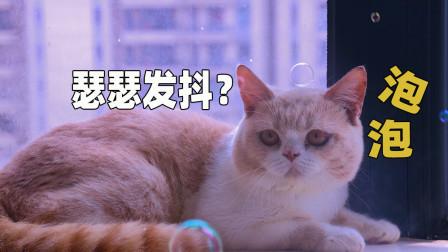 铲屎官对着猫咪吹泡泡,猫会有什么反应?猫:玩疯了!