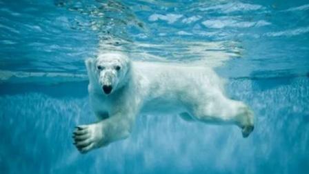 """北极熊送给游客一个""""生化武器"""",泳池瞬间""""炸开了锅""""游客:中奖了?"""
