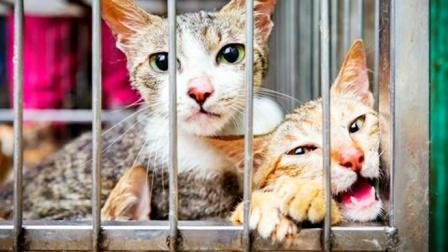 越南人每年吃掉400万只猫,为什么中国人不吃?《本草纲目》告诉你答案