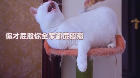 猫咪一天能掉多少毛?梳完主人崩溃了!猫:秃了!