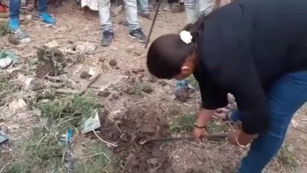 印度大妈见蛇当捡金。
