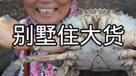 泰婶赶海发现螃蟹痕迹,果然有大家伙,钳子比泰婶家汤勺还大了