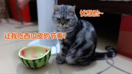 铲屎官:奖励虎斑猫夹子西瓜汁!夹子:你吃西瓜,让我吃西瓜皮?