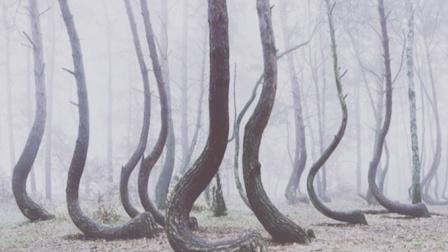 """波兰的""""诡异森林"""",400棵树木竟动作一直,令人感到无助!"""