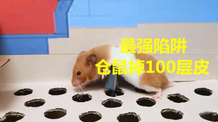 世界上最厉害的迷宫,仓鼠进去直接掉100层皮,网友:就你最会玩