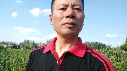 农民歌手王文正拥抱自然演唱会,精彩人生绽放光彩!