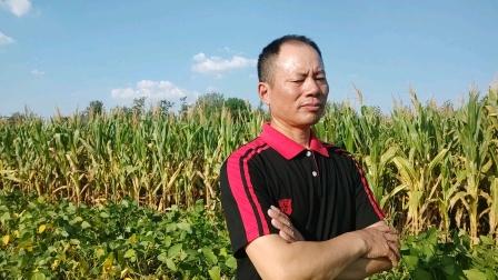 农民歌手王文正拥抱自然演唱会开启田野恋歌