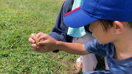【Happy face】【Children】面包超人 6岁孩子观察自然