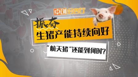 """卓创会客厅—振奋!生猪产能持续向好  """"航天猪""""还能到何时?"""