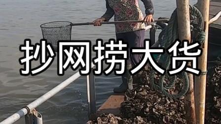 出海发现鱼都浮在海面上,泰婶拿抄网直接捞,泰叔忙叫赶快扔掉