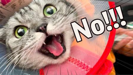 带猫咪去体检,肚皮毛全都剃光光,猫:怎么凉嗖嗖的?